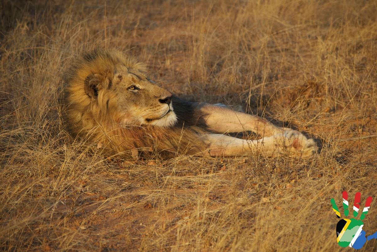 Il re si rilassa